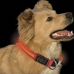 Orange Nite-Dawg LED Illumated Dog Collar, Large 18 to 27 inches